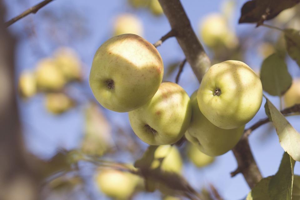 Alimento del mes: la fruta ecológica