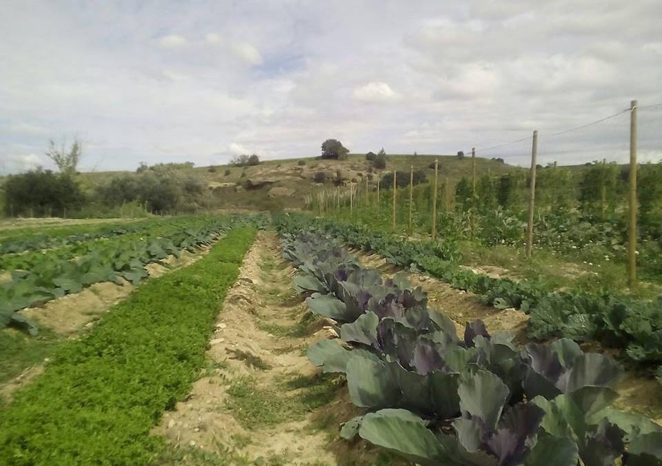 La Huerta de Alcanadre sirve la verdura ecológica para los colegios de la provincia de Huesca