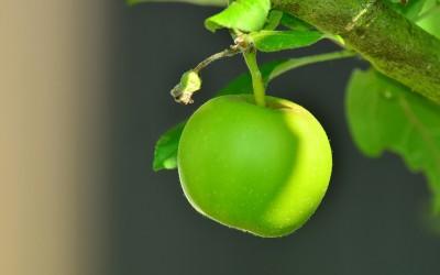 La manzana ecológica, nuestro alimento del mes
