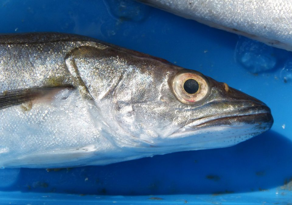 La pesca sostenible, nuestro alimento del mes