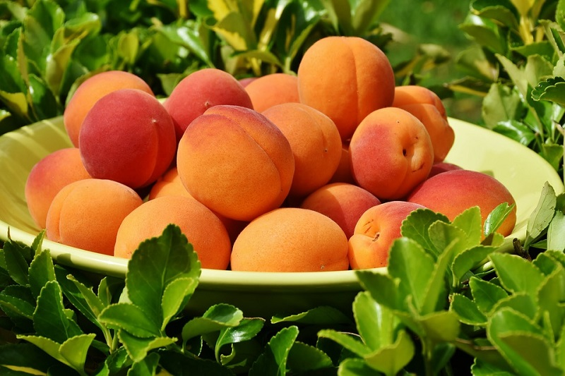 El alimento del mes: Albaricoque ecológico