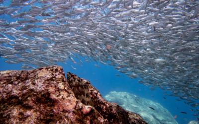 En Combi Catering apostamos por la pesca sostenible
